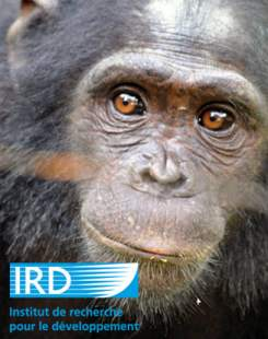 chimpanze-ird_web2.jpg