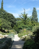 Le jardin alpin de Paris