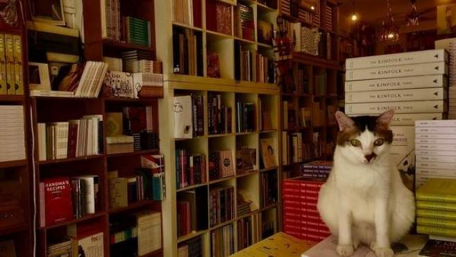 EM Image: Pico chat Singapour librairie BooksActually