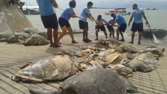 EM photo tortues